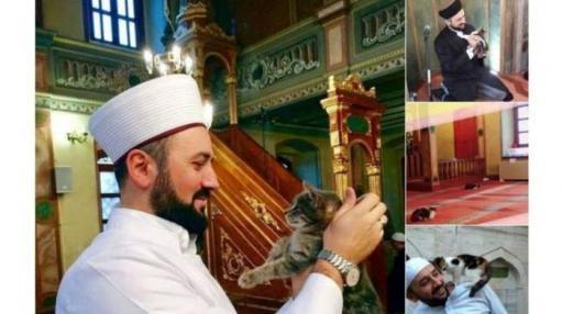 Masjid juga menjadi rumah kucing